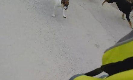 Ataque de perros a ciclistas, cruda realidad ¿Cómo evitarlos? ¿Qué hacer si sufrimos uno de estos ataques?