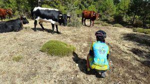 Comunitaria Patricia Carmona con las vacas en Los Calares del río Mundo
