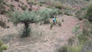 Comunitaria Patricia pasando por bancales de oliveras centenarias en Los Coloraos por Comunidad Biker MTB